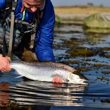 Guidat flugfiske efter havsöring / en dag