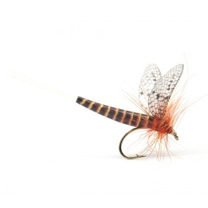 Rust CDC Extended Body Mayfly