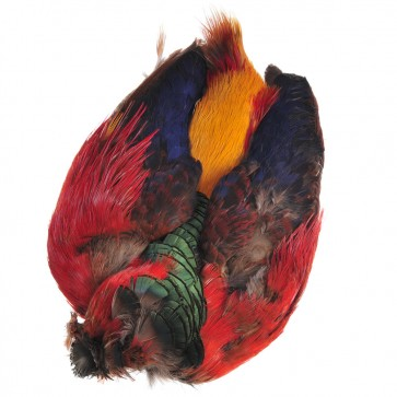 Golden Pheasant Body Skin