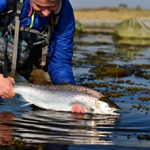 Guided fishing for Seatrout in the Baltic Sea / one day