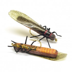 Orange Stonefly