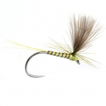 Quill & CDC Parachute Golden Olive
