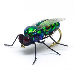 Green House Fly