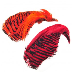 Golden Pheasant Complete Head Dyed