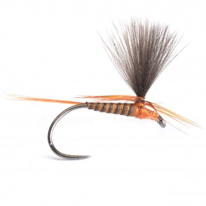 Quill & CDC Parachute Ginger